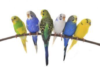 Стоит ли заводить попугая