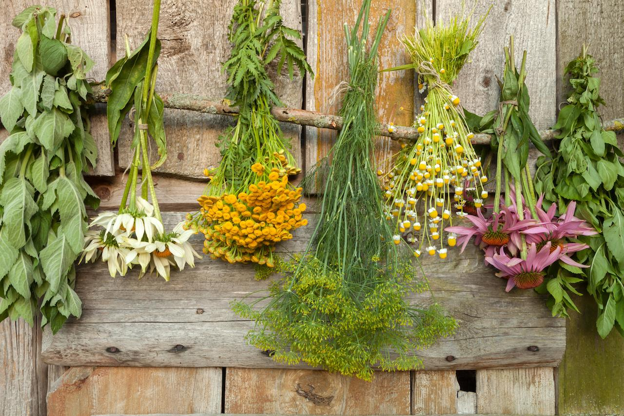 Успокаивающие лекарственные травы