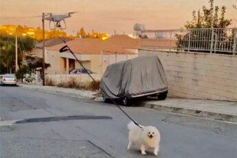 Креативный способ вывести на прогулку свою собаку
