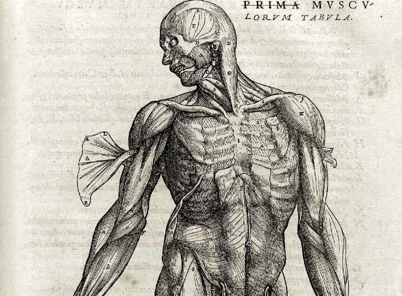Лишние органы в теле человека