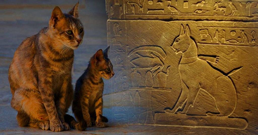 Появление кошки в доме — хороший знак