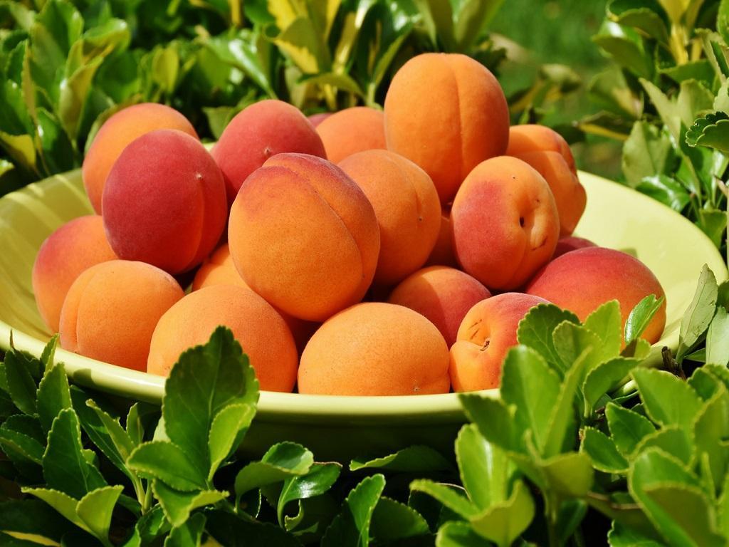 Все о пользе персиков