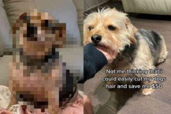 Хозяйка сама подстригла собаку