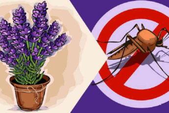 Какие растения отпугивают комаров