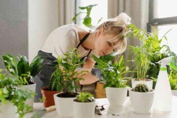 8 растений для тех, кому скучно выращивать суккуленты