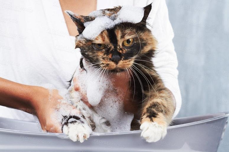 Какие кошки не боятся воды