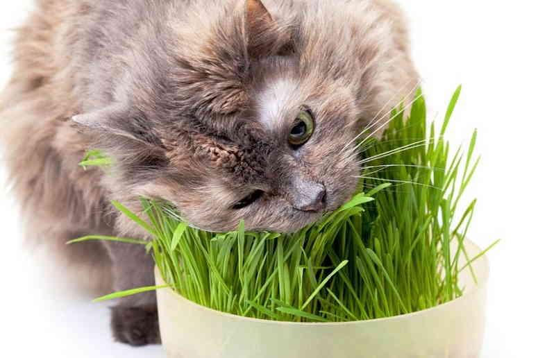 Зачем кошке нужна зелень?