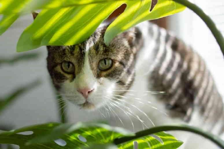Самые безопасные для кошек растения